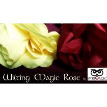 Wilting Rose by Strixmagic